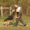 В Омске определили самых послушных собак