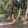 «Черные лесорубы» причинили лесному фонду Тарского района Омской области ущерб на 4 миллиона рублей