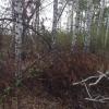 ГУ Лесного хозяйства Омской области разрешило собирать валежник в лесу