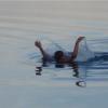 В Омской области во время купания в котловане утонул школьник