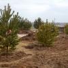 Больше 1 000 деревьев высадят на Зелёном острове