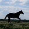 Удар лошадиных копыт стал смертельным для жителя Омской области