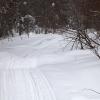 Полицейские ищут браконьера, застрелившего 5 косуль в Омской области