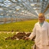 Для омичей круглый год будут выращивать свежие овощи