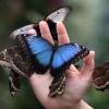 В Омске продают экзотический бизнес, который окупится за неделю