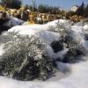 Снег в Омской области побил метеорологический рекорд 1958 года