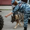 Места празднования Дня Победы проверят кинологи с собаками