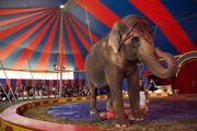Омский цирк поддержат федералы