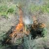 Омичи помогли найти и уничтожить заросли наркосодержащих растений