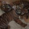 Жители Омской области выберут имя для тигрят в Большереченском зоопарке