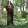 Голодный медведь стал заходить в деревни Омской области и нападать на скот