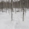Жители Омской области покатались на снегоходах и убили трех лосей