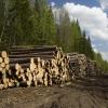 Омская область заработала на лесах 85 миллионов за год