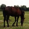 В Омской области в дыму пожара задохнулись две лошади и жеребенок