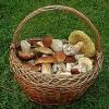 Стали известные самые грибные и ягодные места в Омской области