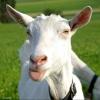 В Москаленском районе по горячим следам задержали похитителя коз