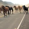 Табун лошадей на трассе в Омской области устроил смертельное ДТП