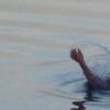 В Омской области утонул 2-летний ребенок