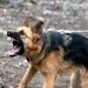 В Омске цепной пёс напал на 11-летнюю девочку