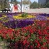 В Омске на День города для пешеходов освободят центральные улицы