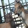 Телезрители Омска собрали для Большереченского зоопарка полмиллиона рублей