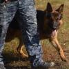 Полицейские с собакой быстро нашли преступников, ограбивших 90-летнюю омичку