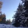 К Новому году в Омске потеплеет до -11 градусов