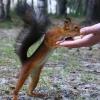 В Омске Роспотребнадзор не станет травить белочек в парках
