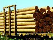 Омская фирма незаконно экспотировала лес