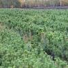В Омской области для восстановления лесов подготовили семь миллионов сеянцев