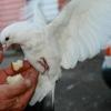 В Омске обнаружен очаг острой инфекционной болезни