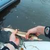 Бывшего омского полицейского обвиняют в незаконном отлове стерляди