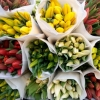 Где приобрести оптом качественные тюльпаны?