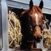Из Омской области в Казахстан хотели незаконно вывести лошадь