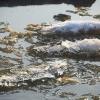 В субботу днем в Омской области ожидается до +12 градусов