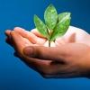 Некоммерческие омские организации по охране окружающей среды могут получить субсидии от Минприроды