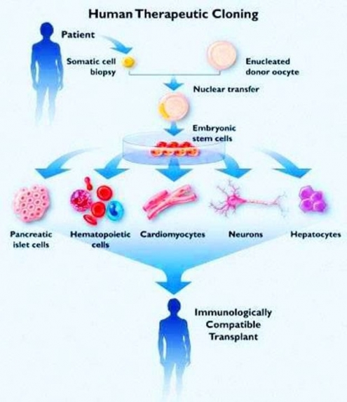 immunological problems