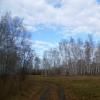 В Омской области от укусов клещей пострадал 21 ребенок