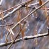 В начале рабочей недели в Омской области потеплеет