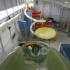 В Омске в очередной раз открылся аквапарк на Завертяева