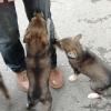 В одной из деревень Омской области введен карантин по бешенству