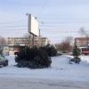 В Ленинском округе Омска работает 8 официальных елочных базаров