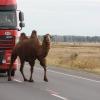На трассе в Омской области приостановилось движение