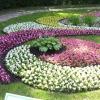 Более 6 миллионов цветов украсят городские клумбы в этом году
