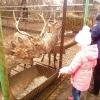 Большереченский зоопарк приглашает на День защиты детей