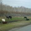 На двух фермах в Омской области нашли животных с туберкулезом
