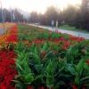 В Омске третья  неделя августа начнется с небольших дождей