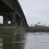 В Омске планируют взяться за ремонт Ленинградского моста в 2018 году