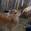 Омичка открыла на Алтае приют для диких животных