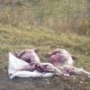 В Омской области задержаны браконьеры с тушами двух косуль в багажнике